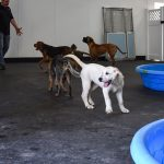 Dogs playing in the indoor pools