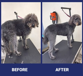 Grooming before and after