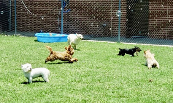 Dogs running in the yard
